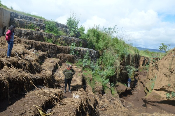Bamboo and restoration of degraded landscapes