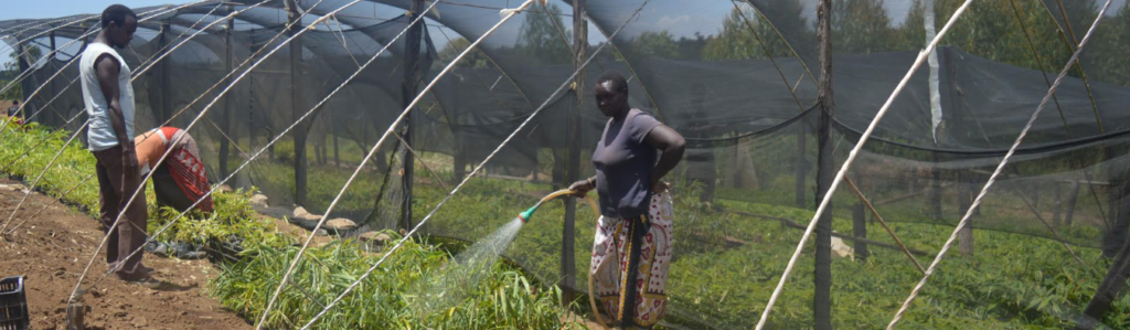 women and the bamboo industry in Kenya